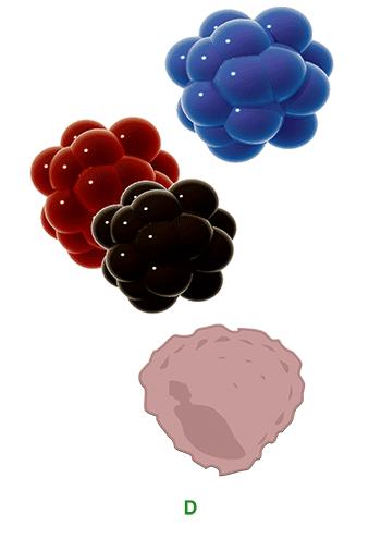 macrophag-phagozytose-der-tattoo-farbe-tattooentfernung-berlin-avederma